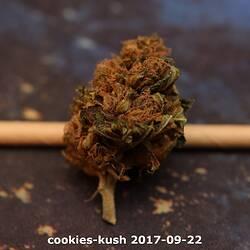cookies-kush 2017-09-22