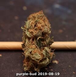 purple-bud 2019-08-19