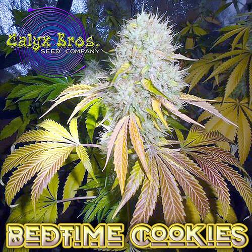 bedtime-cookies-avr1