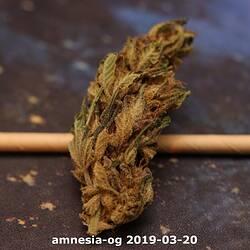 amnesia-og 2019-03-20