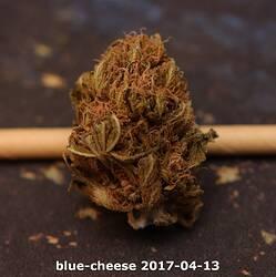 blue-cheese 2017-04-13
