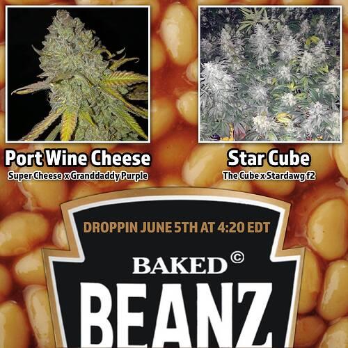baked-beanz-drops