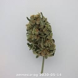 amnesia-og 2020-05-14