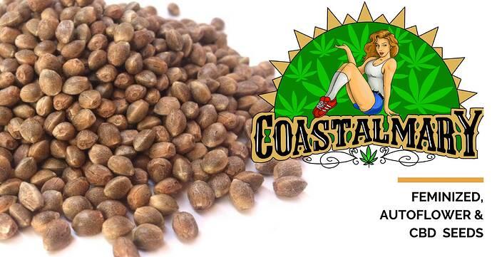 Coastal Mary Seeds(1)