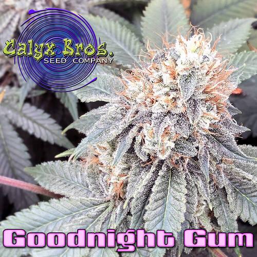 goodnight-gum