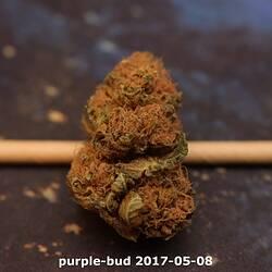 purple-bud 2017-05-08