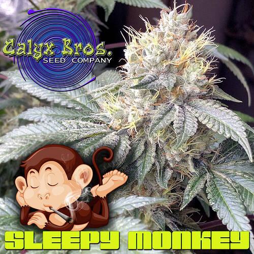 sleepy-monkey-kak-week8
