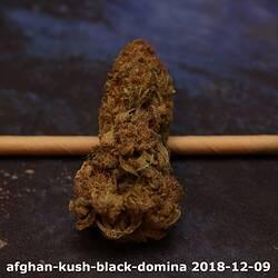 afghan-kush-black-domina 2018-12-09