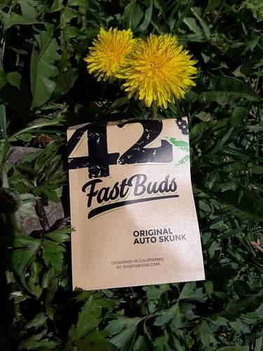 4049778_grow-journal-by-hillmanfastbudsoriginal-auto-skunk