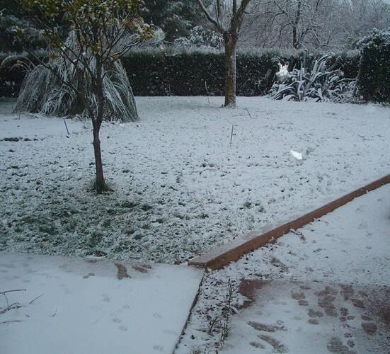 snow53652