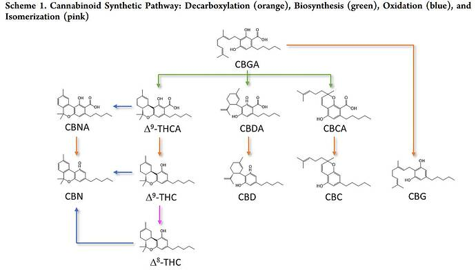 Cannabinoid Decarboxylation A Comparative Kinetic Study pdf