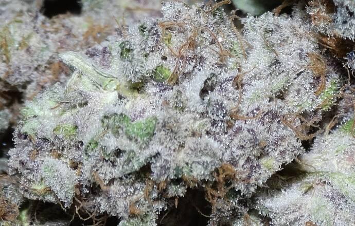 DSC05602 - crop1