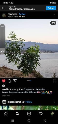 Screenshot_20210205-112221_Instagram