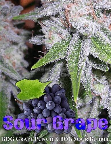bog-seeds-sour-grape_91135ef3-d7a9-43eb-a630-856b7460f59f