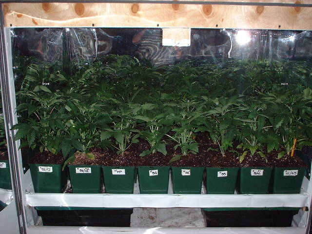 Tick's Sogg'n Journal - General Indoor Growing - Overgrow com