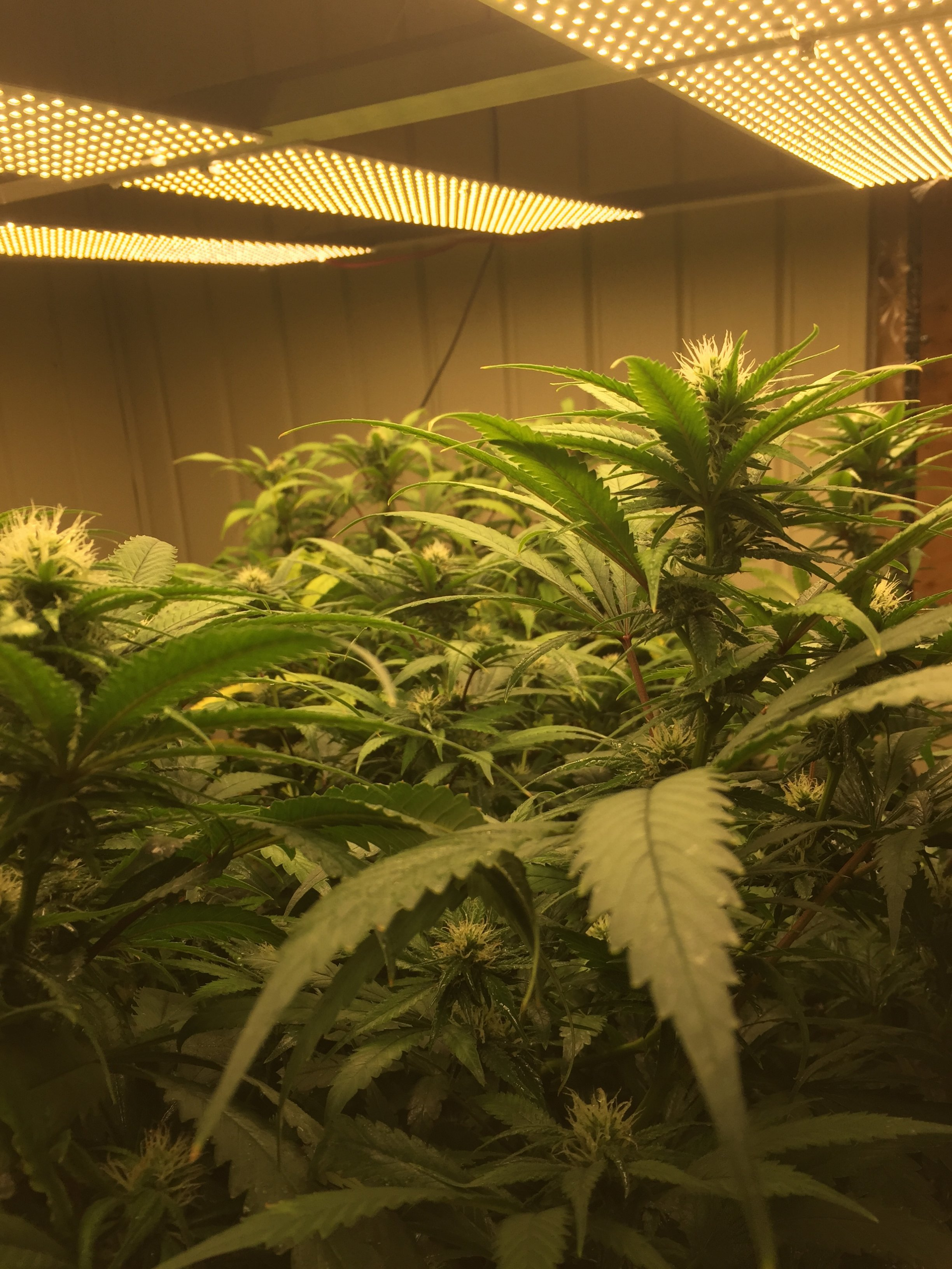 DIY Grow Lights with high-efficiency LED strips - Growroom