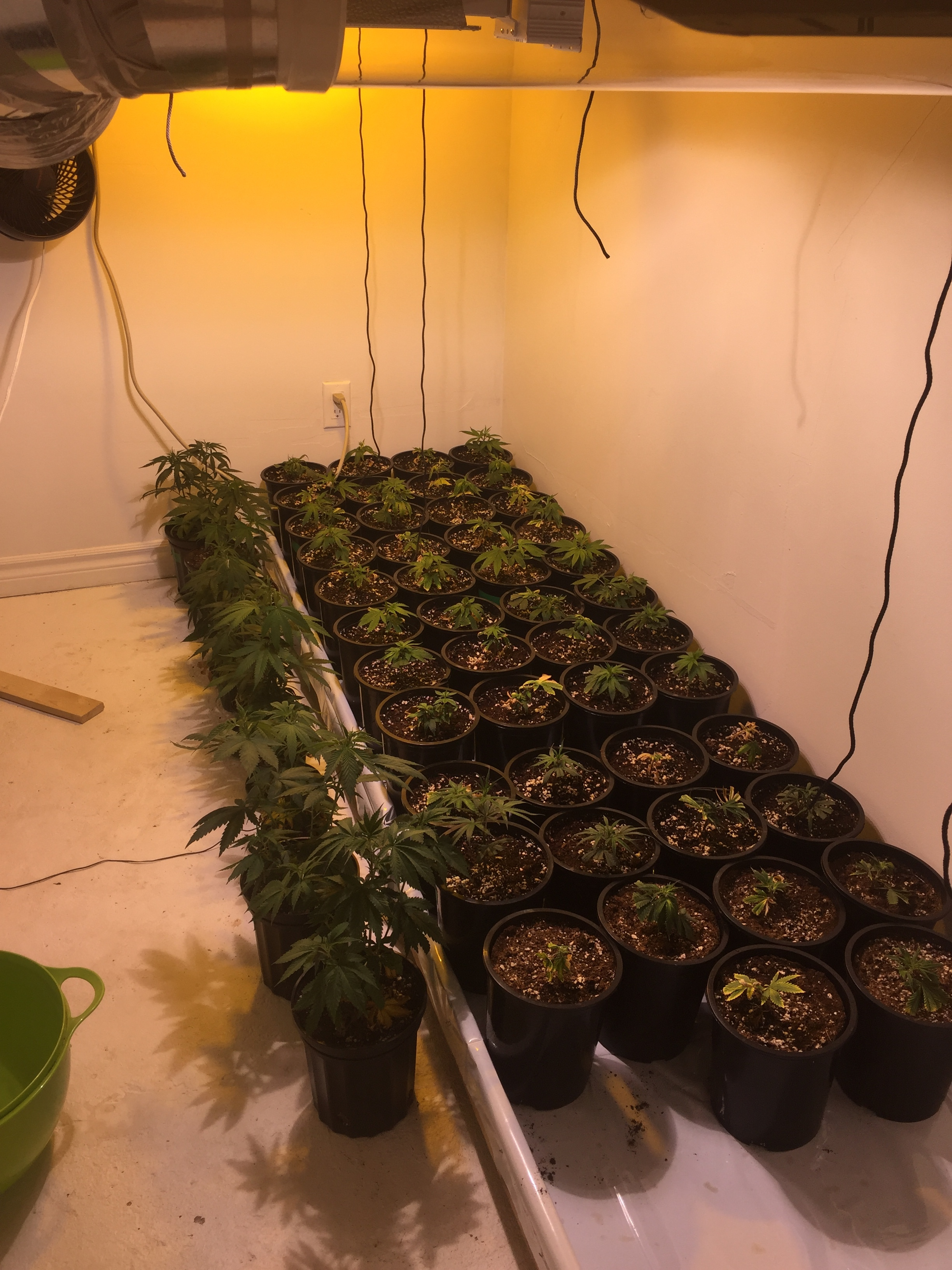 Grow Journal- 7 strain, 120 plant SOG - Growroom Diaries