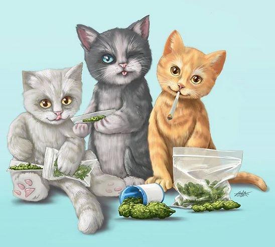 3highcats