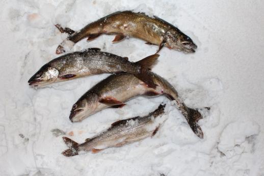 ice hut 2021 fish35